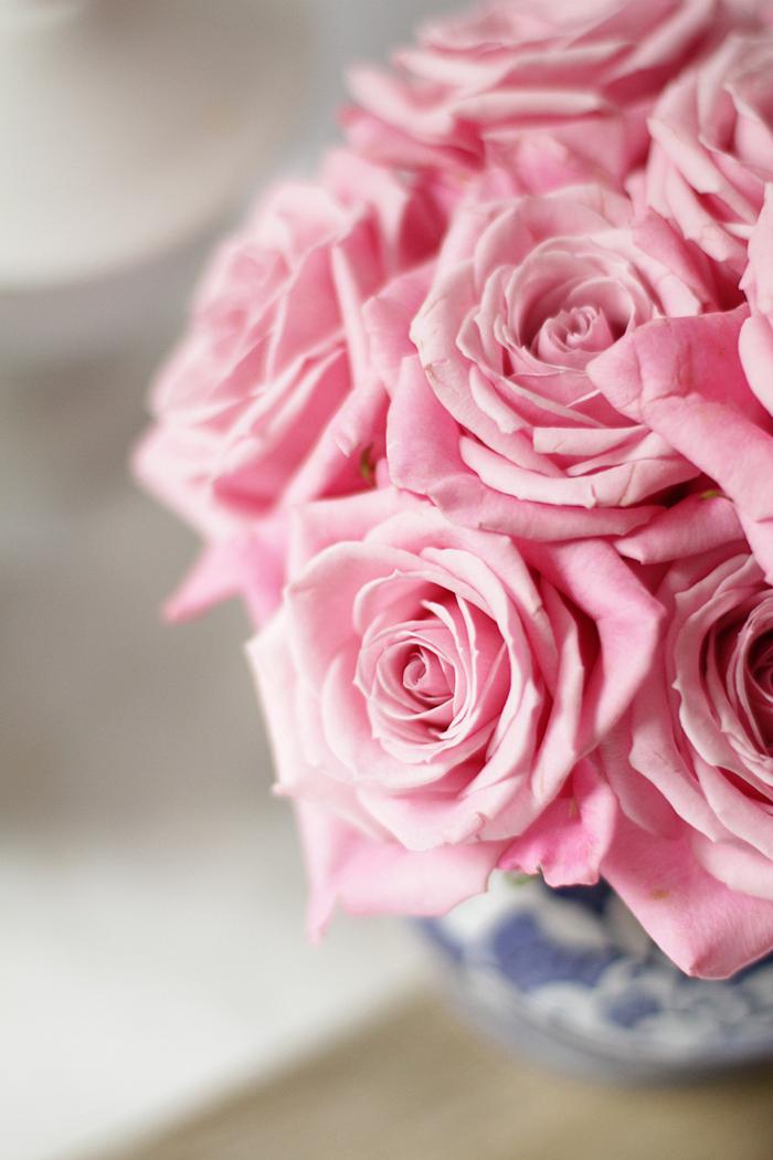 rose, pink rose
